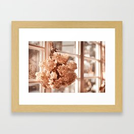 Tethered hydrangea or hortensia Framed Art Print