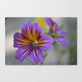 gentle beauty Canvas Print