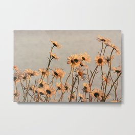 Daisies of the river bank Metal Print