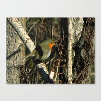 robin Canvas Prints featuring robin by giol's