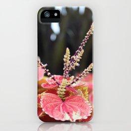 Fall II iPhone Case