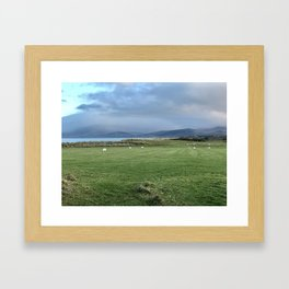 Grazing Sheep, Co Kerry, Ireland Framed Art Print