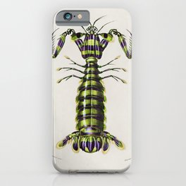 Giant mantis shrimp (Squilla Maculata) illustrated by Charles Dessalines D Orbigny (1806-1876) iPhone Case