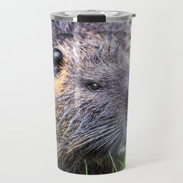 Nutria Myocastor Coypus animal close-up in wild nature in french swamps Travel Mug