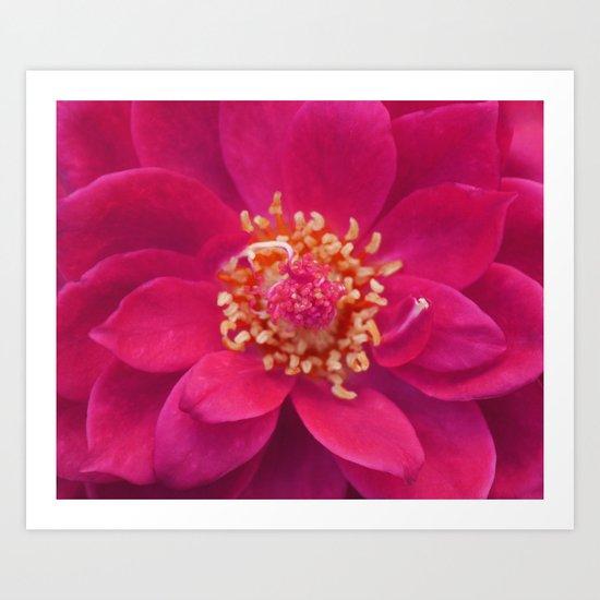 Red Petal Mandala Art Print