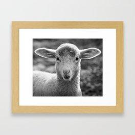 Lamb's portrait Framed Art Print