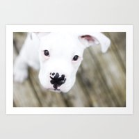 boxer Art Prints featuring Boxer by sara montour
