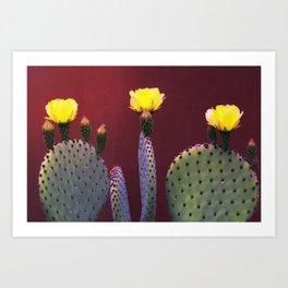 Yellow Prickly Pear Art Print