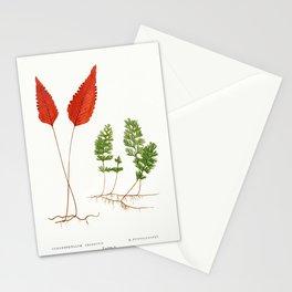 Edward Joseph Lowe - Hymenophyllum Cruentum and H. Tunbridgense Stationery Cards