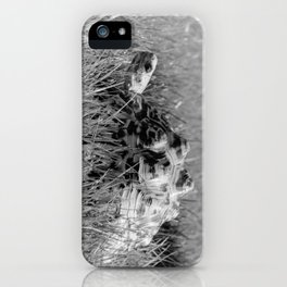 Leopard Tortoise in Grass iPhone Case