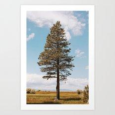 Marsh Tree Art Print