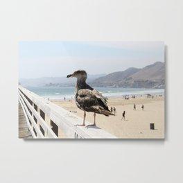 Thinking Bird In California Metal Print