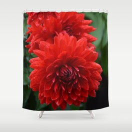 Fresh Rain Drops - Red Dahlia Shower Curtain
