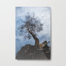 Weird Nature Picture | Unusual tree | Roots | Nature phenomena | in the Sky | Amazing | Brunches Metal Print