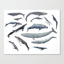 Whales all around Canvas Print