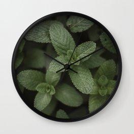 Mint at a desert farm in The Negev, Israel Wall Clock