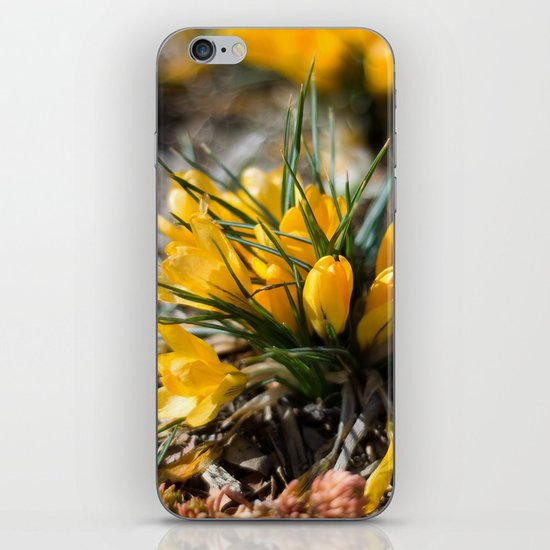 Sunlit Crocus iPhone & iPod Skin