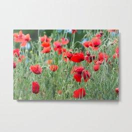 Wild poppies Metal Print