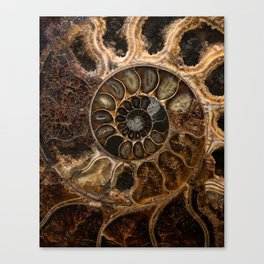 Earth treasures - Fossil in brown tones Canvas Print