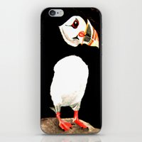 puffin iPhone & iPod Skins featuring Puffin by  Alexia Miles photography