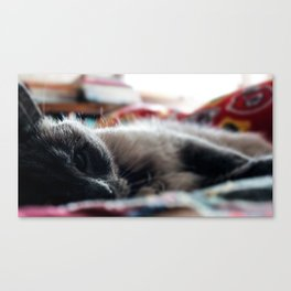 """The Cat 6 - """"Seriously?"""" Canvas Print"""