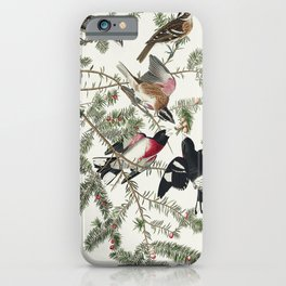 Rose-breasted Grosbeak from Birds of America (1827) by John James Audubon etched by William Home Liz iPhone Case