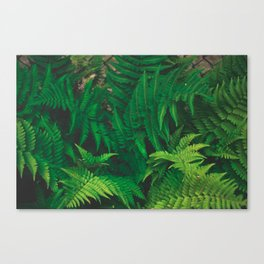 Leaf jungle Canvas Print