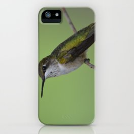 Ruby Throated Humming Bird At Rest iPhone Case