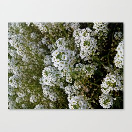 """The Enchanting Foliage of Tiny """"Bunched"""" Blossoms Canvas Print"""