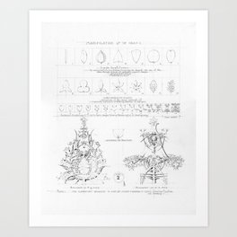 Master Copy of Louis Sullivan's System of Ornament - Plate 2 Art Print