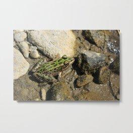 Spotted Green Frog in Mud Metal Print