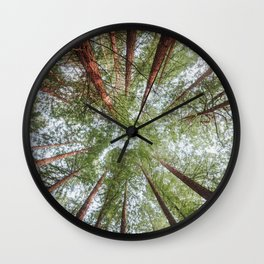 Looking Up - Redwood forest Wall Clock