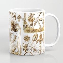 Ernst Haeckel - Tubulariae Coffee Mug
