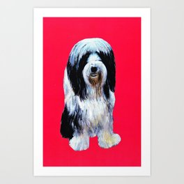 Bearded collie on cerise Art Print