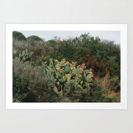Roadside Cactus | Nature and Landscape Photography Art Print