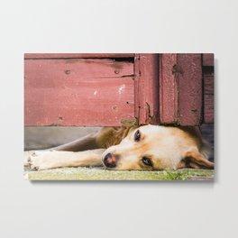 Dog Tired Metal Print