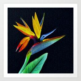 BIRD OF PARADISE01 Art Print
