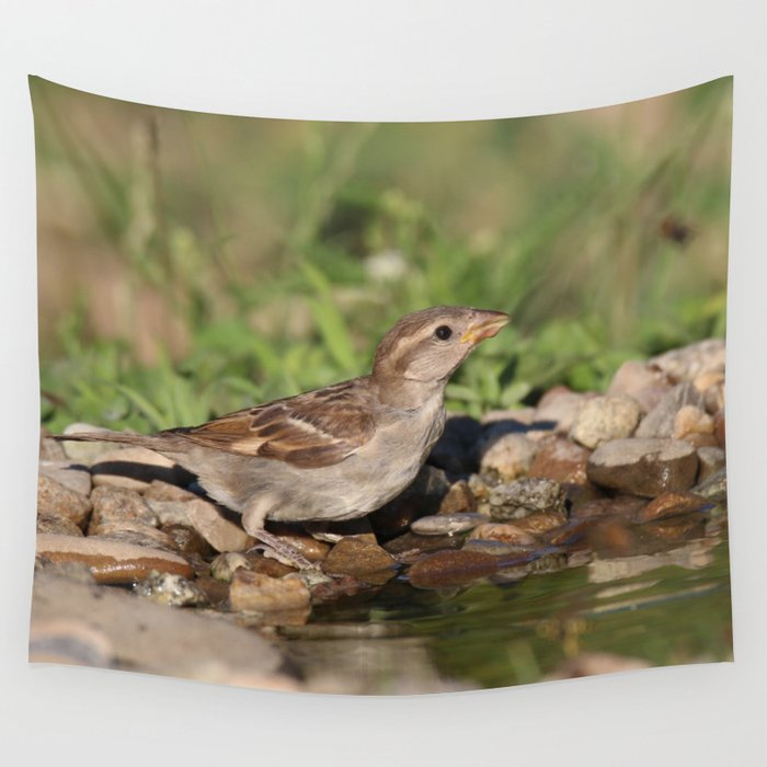young sparrow at water and drink Wall Tapestry