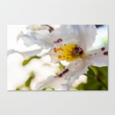 Orchid White Canvas Print