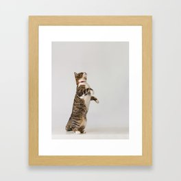 active cat playing Framed Art Print