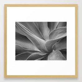 Mono Agave Attenuata Framed Art Print