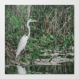 Just Wading Around Canvas Print