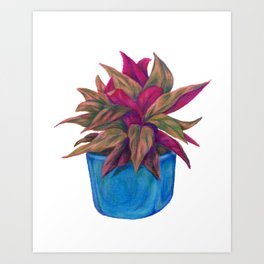 Calathea Triostar Art Print