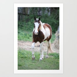 Tennessee Painted Pony Art Print
