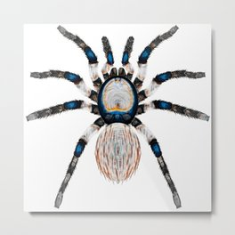 Desert Toned Spider Metal Print