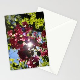 Indigenous Florida Flower Stationery Cards