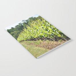 Vineyard Path Notebook