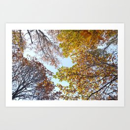 """""""Up in the air II"""". Autumn colors Art Print"""