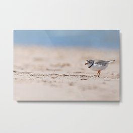 Great Lakes Piping Plover Metal Print