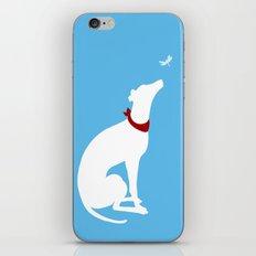 Greyhound Dog Admiring dragon fly iPhone & iPod Skin